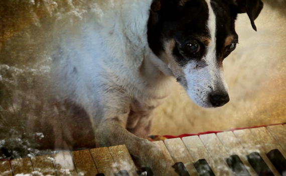 Sky Arte: stasera Heart of Dog di Laurie Anderson