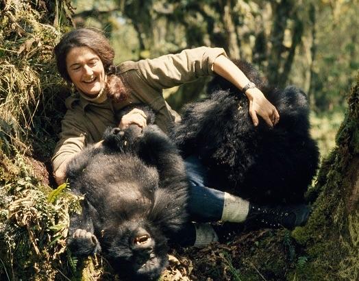 La vera storia delle primatologa Dian Fossey su National Geographic