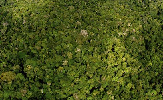 National Geographic Wild: questa sera Amazzonia Selvaggia